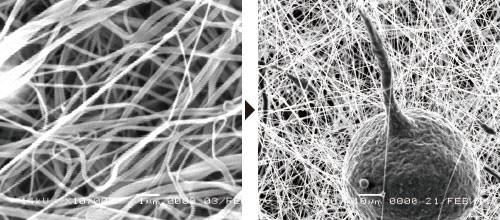 衛生管理制度HACCP(ハサップ)対策には、ナノエイトフィルターが最適です。極細のナノファイバー(ナノ繊維)が花粉やPM2.5などの微細粒子の通過を抑止し、食品衛生上の危害の発生を防止する役割を果たしてくれます。写真はナノエイトフィルターが花粉をキャッチしている画像です。ナノエイトフィルターのナノファイバーは、10000倍に拡大して視認できる極細のナノ繊維を使用しています。
